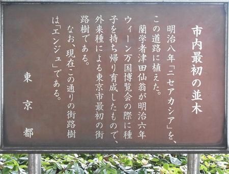 街路樹の記念碑