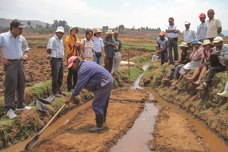 マダガスカルでコメ農家を対象とした栽培技術研修を実施している様子