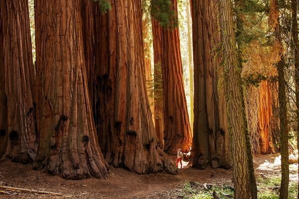カリフォルニア州セコイア国立公園©️My Good Images /Shutterstock.com