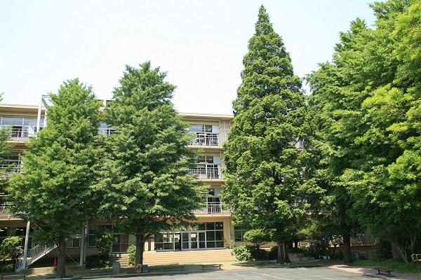 中等部旧校舎。矢印がメタセコイア