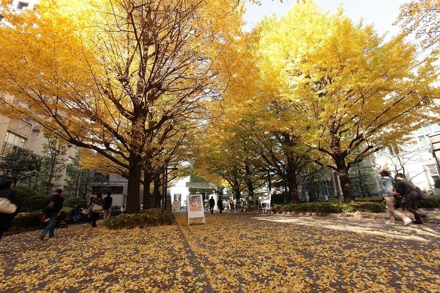 秋の青山キャンパス