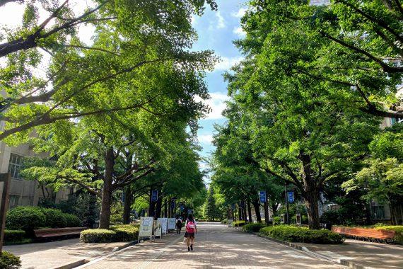 青山学院 コロナ禍の銀杏並木(2020年6月~2021年6月)